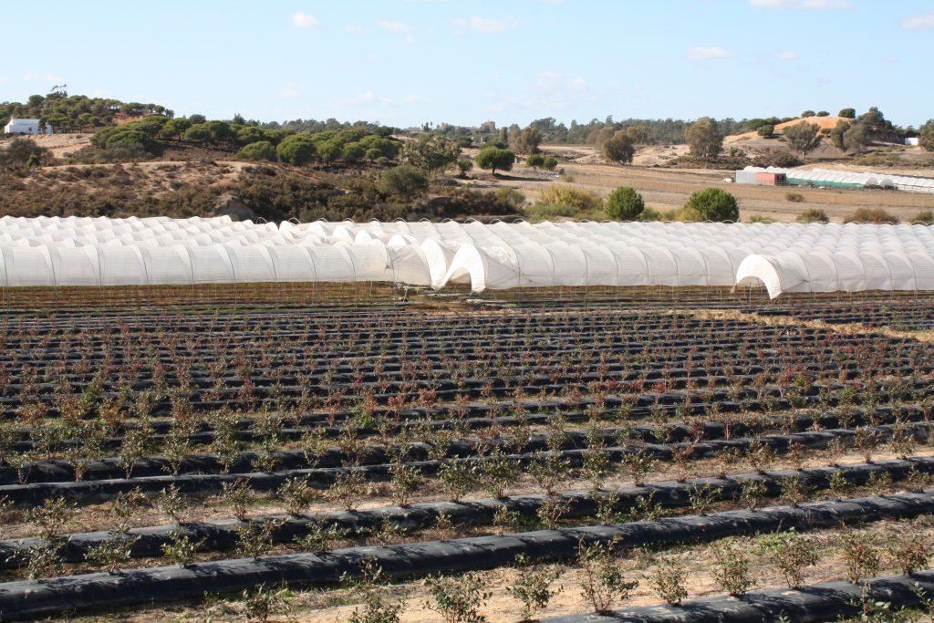 agroecologica-el-origen-el-silbao
