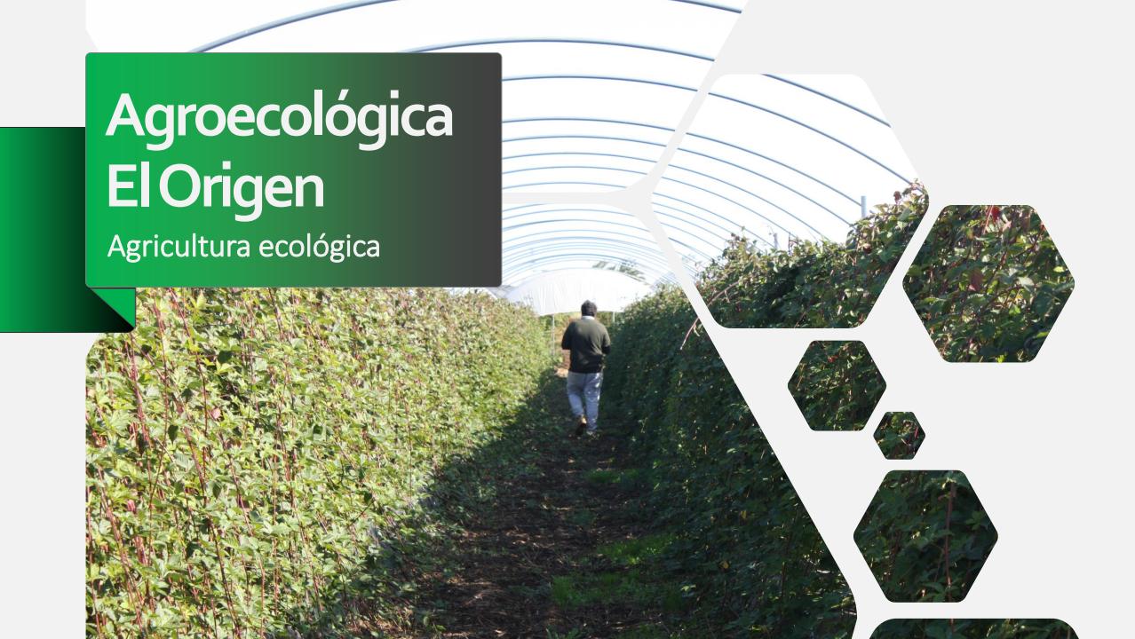 agroecologica-el-origen-encuentro-de-sanidad-agroecologica