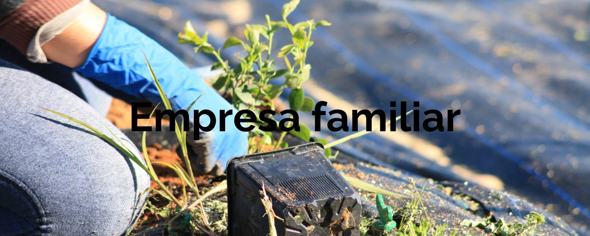 agroecologica-el-origen-quienes somos-empresa-familiar-01