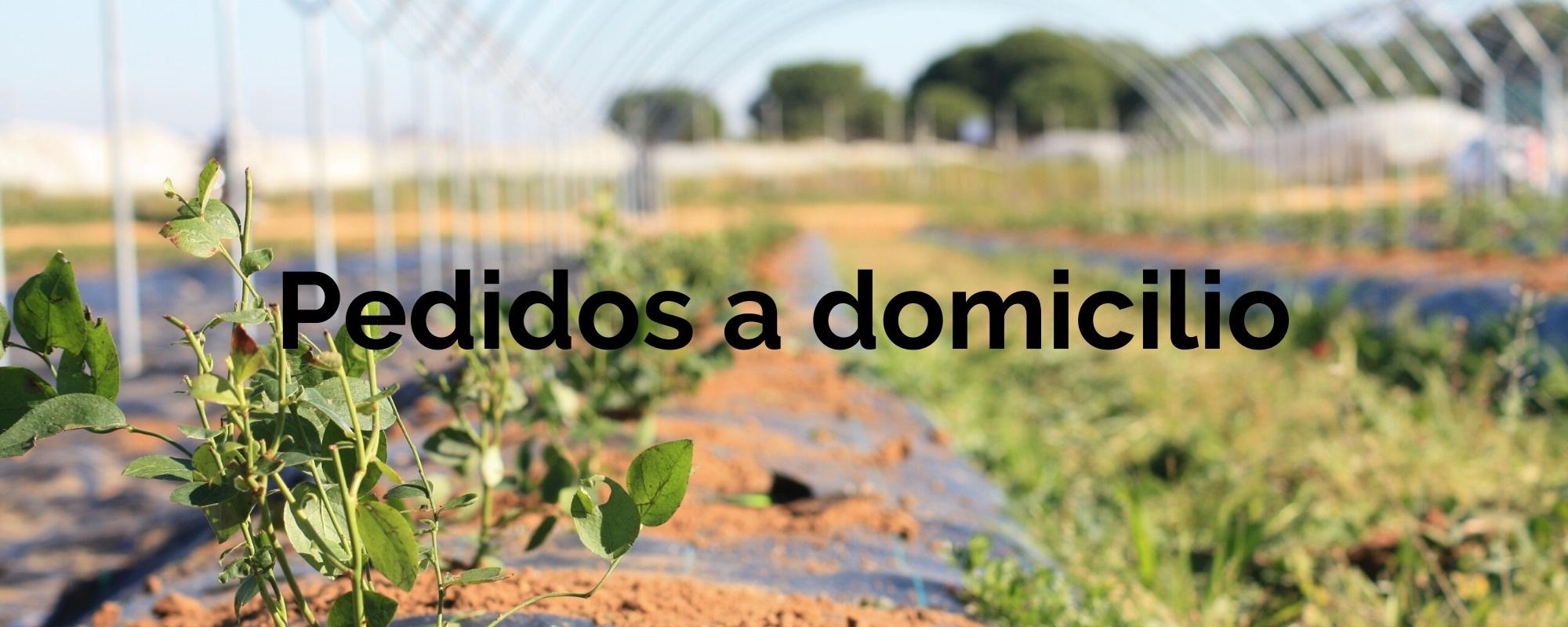 pedidos-a-domicilio-agroecologica-el-origen-agricultura-ecologica-01